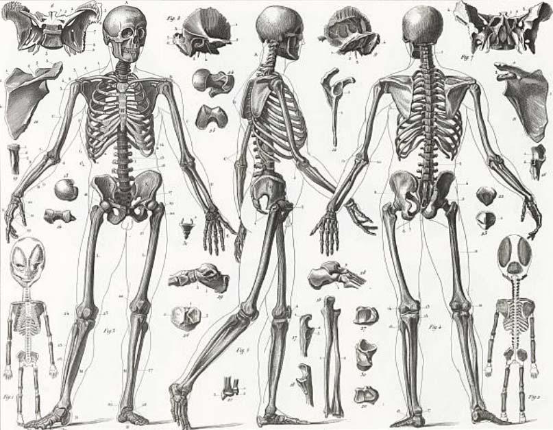 Cómo Dibujar El Esqueleto Humano Ilustradora Madrid Dibujante